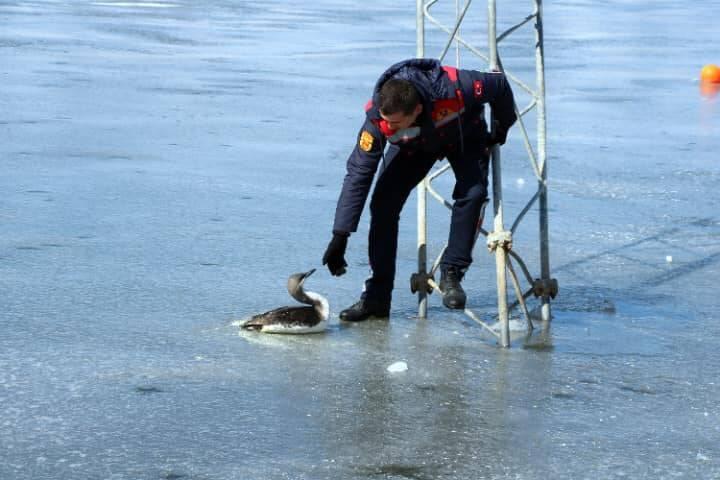 Donmak üzere olan kara gerdanlı dalgıç kuşunu itfaiye kurtardı 1