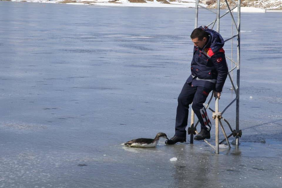 Donmak üzere olan kara gerdanlı dalgıç kuşunu itfaiye kurtardı 3