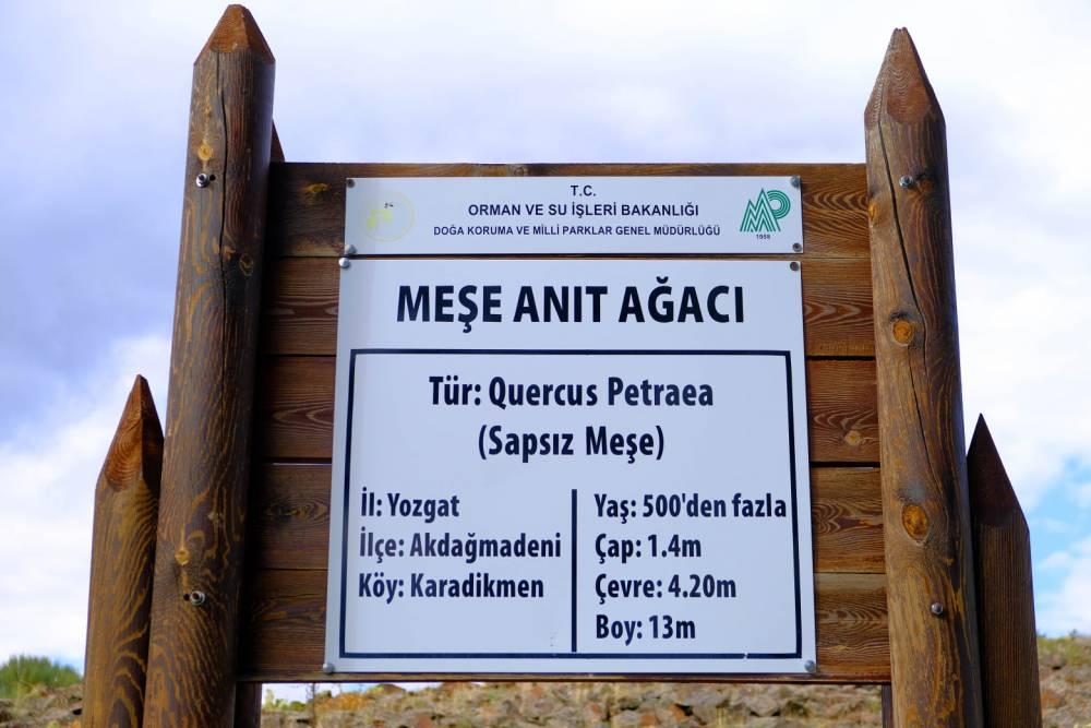 Türkiye Şampiyonu Yozgat'ta! 500 yaşından fazla.. 2