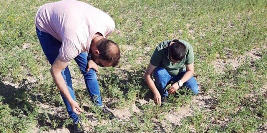 Yozgat'ta çiftçilere uyarı! Hastalık olabilir