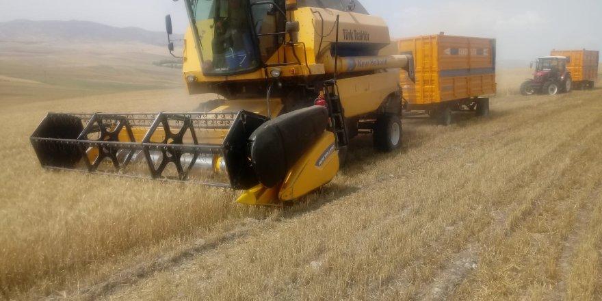 Yozgat'ta çiftçiler zor durumda! Yüzde 50 düştü