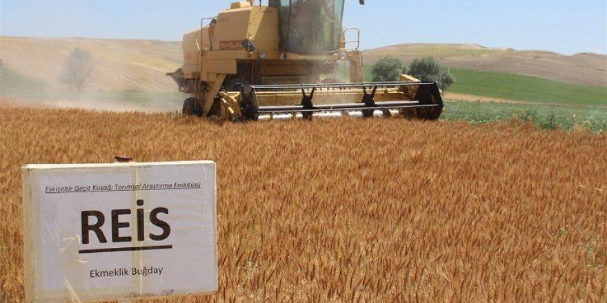 Yozgat'ta yerli ve milli buğday hasadı yapıldı
