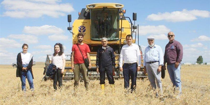 Toprak İşlemesiz ekim yapılmıştı! Daha fazla verim elde edildi