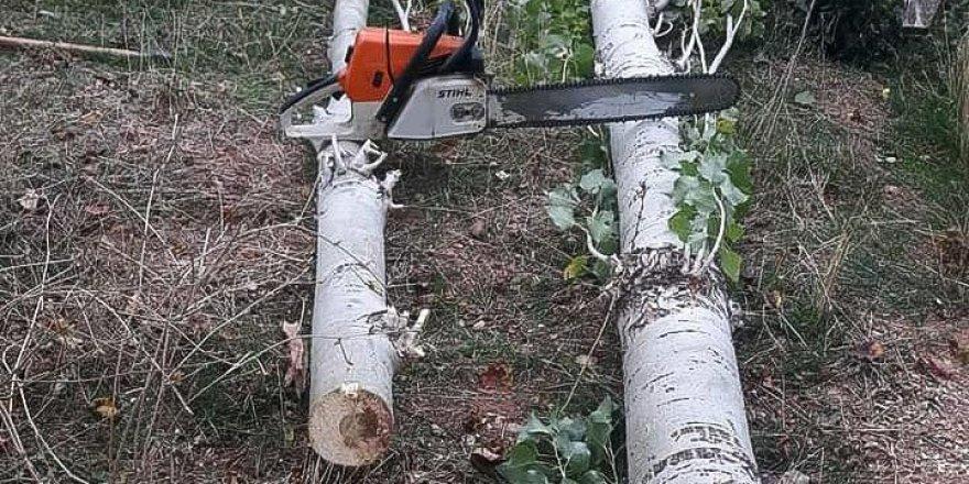 Saraykent'teki kavak ağaçlarının kesimine başlandı