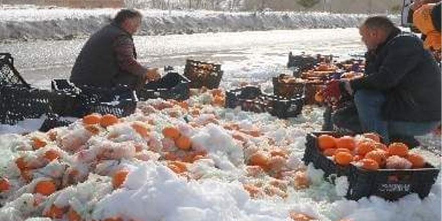 20 ton portakalı yola devrildi! Vatandaşlar topladı