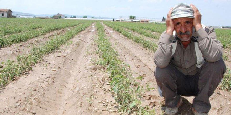 Yozgat'ta kuraklık çiftçiyi vurdu