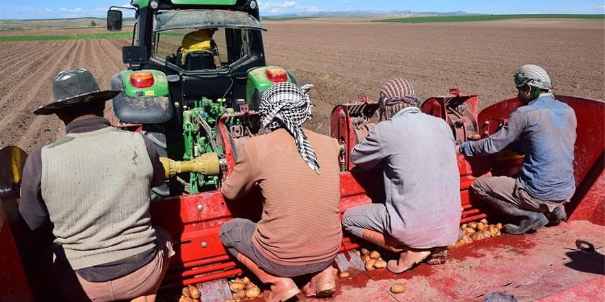 Yozgat'ta yerli patates ekimi yapıldı
