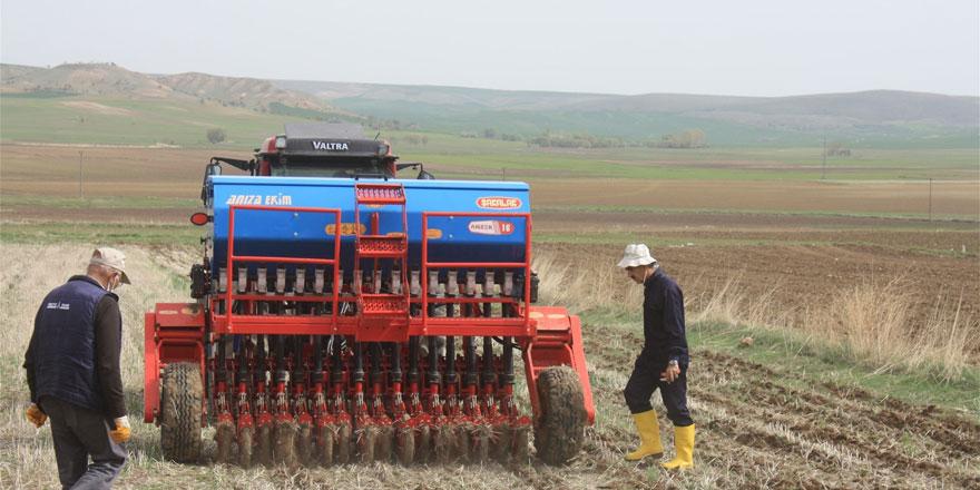 Yozgat'ta toprak işlemesiz nohut ekimi